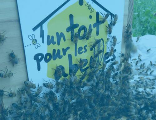 Un Toit Pour Les Abeilles : chez Bee, l'abeille n'est pas seulement sur le logo !