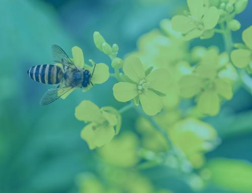 """""""Bee Bus Stops"""" : des arrêts de bus pour réduire les îlots de chaleur et protéger les abeilles !"""